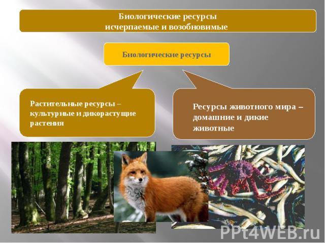 Биологические ресурсыисчерпаемые и возобновимые Биологические ресурсы Растительные ресурсы –культурные и дикорастущие растения Ресурсы животного мира – домашние и дикие животные