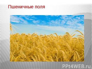Пшеничные поля