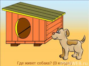 Где живет собака? (В конуре)