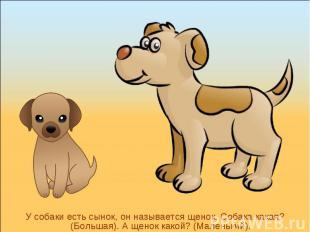 У собаки есть сынок, он называется щенок. Собака какая? (Большая). А щенок какой