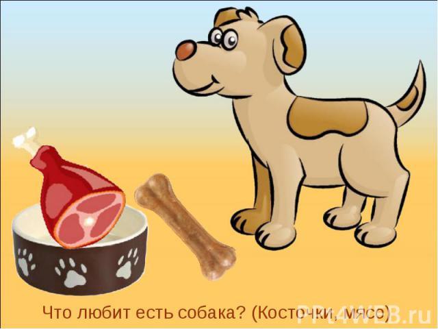 Что любит есть собака? (Косточки, мясо)