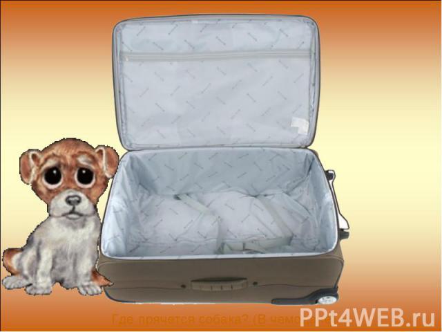Где прячется собака? (В чемодане)
