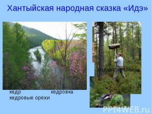 Хантыйская народная сказка «Идэ» кедр кедровкакедровые орехи