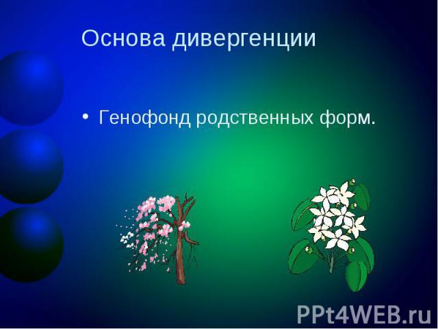 Основа дивергенцииГенофонд родственных форм.