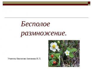 Бесполое размножение Учитель биологии Антонова Н.Л.
