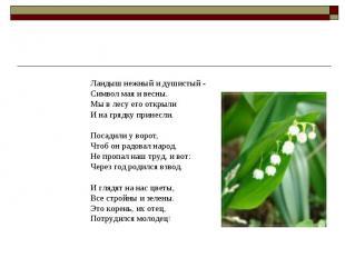 Ландыш нежный и душистый - Символ мая и весны. Мы в лесу его открыли И на грядку