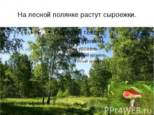 На лесной полянке растут сыроежки.