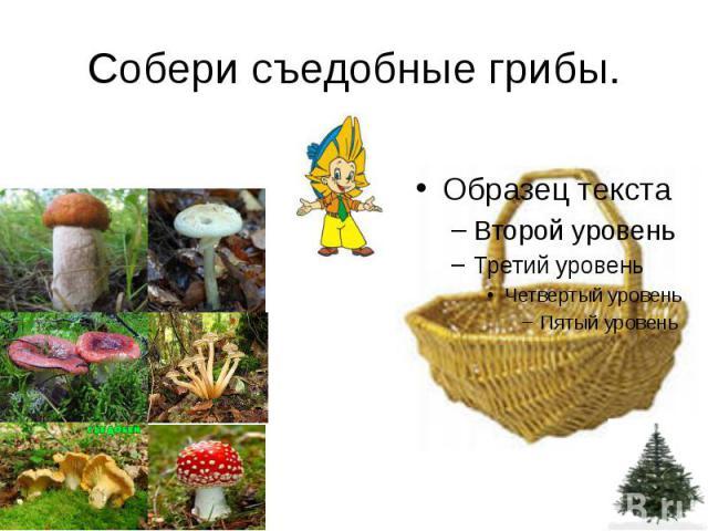 Собери съедобные грибы.