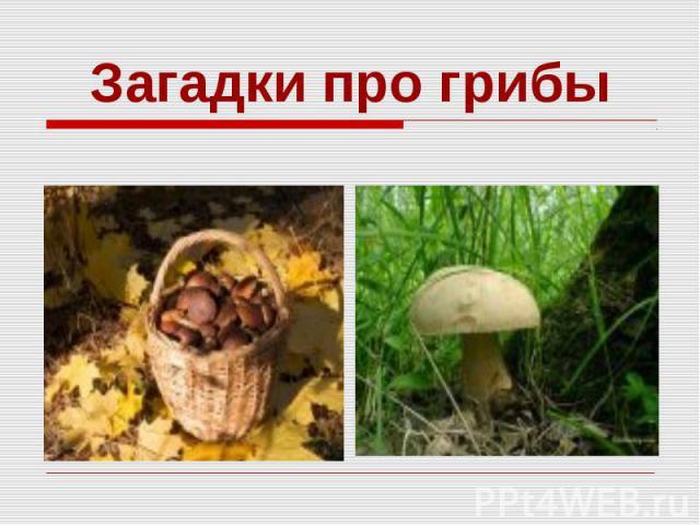Загадки про грибы
