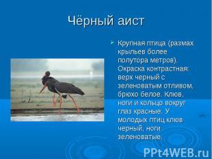 Чёрный аист Крупная птица (размах крыльев более полутора метров). Окраска контра