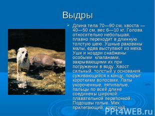 Длина тела 70—90 см, хвоста — 40—50 см, вес 6—10 кг. Голова относительно небольш