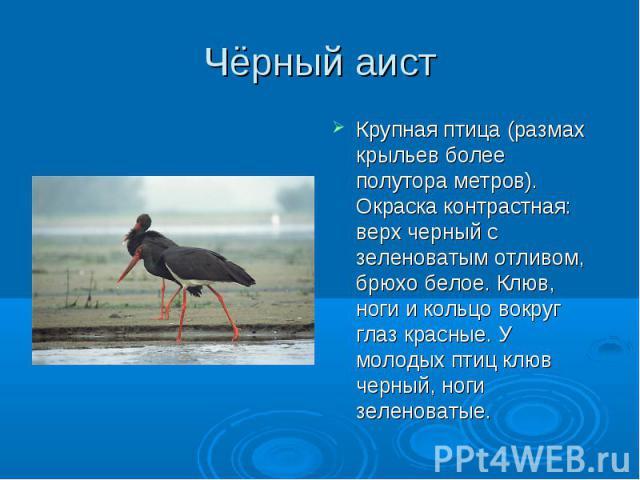 Чёрный аист Крупная птица (размах крыльев более полутора метров). Окраска контрастная: верх черный с зеленоватым отливом, брюхо белое. Клюв, ноги и кольцо вокруг глаз красные. У молодых птиц клюв черный, ноги зеленоватые.