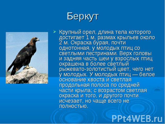 Крупный орел, длина тела которого достигает 1 м, размах крыльев около 2 м. Окраска бурая, почти однотонная, у молодых птиц со светлыми пестринами. Верх головы и задняя часть шеи у взрослых птиц окрашена в более светлый рыжевато-золотистый цвет, чего…