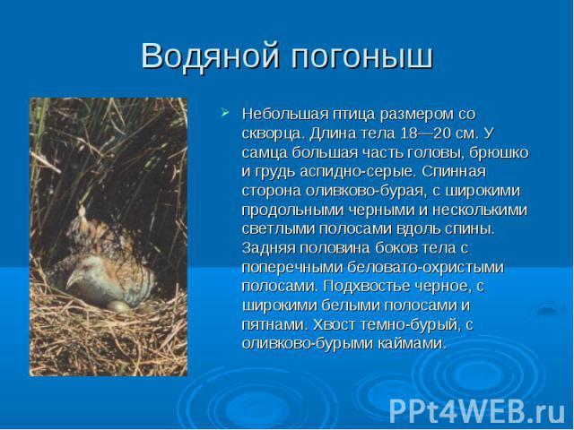 Небольшая птица размером со скворца. Длина тела 18—20 см. У самца большая часть головы, брюшко и грудь аспидно-серые. Спинная сторона оливково-бурая, с широкими продольными черными и несколькими светлыми полосами вдоль спины. Задняя половина боков т…
