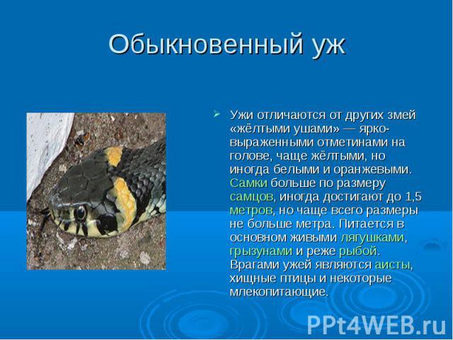 Обыкновенный уж Ужи отличаются от других змей «жёлтыми ушами» — ярко-выраженными отметинами на голове, чаще жёлтыми, но иногда белыми и оранжевыми. Самки больше по размеру самцов, иногда достигают до 1,5 метров, но чаще всего размеры не больше метра…