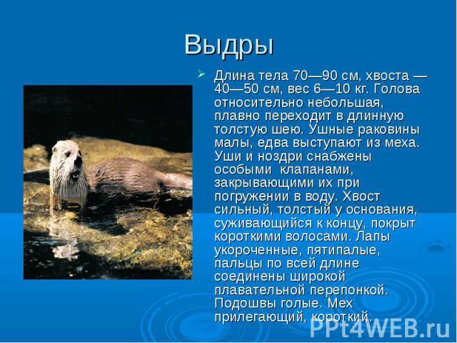 Длина тела 70—90 см, хвоста — 40—50 см, вес 6—10 кг. Голова относительно небольшая, плавно переходит в длинную толстую шею. Ушные раковины малы, едва выступают из меха. Уши и ноздри снабжены особыми клапанами, закрывающими их при погружении в воду. …