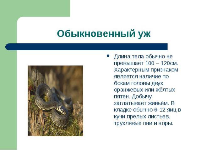 Длина тела обычно не превышает 100 – 120см. Характерным признаком является наличие по бокам головы двух оранжевых или жёлтых пятен. Добычу заглатывает живьём. В кладке обычно 6-12 яиц в кучи прелых листьев, трухлявые пни и норы.