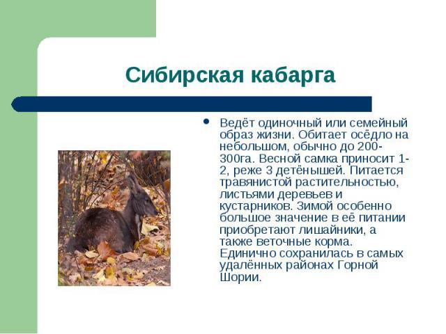 Сибирская кабарга Ведёт одиночный или семейный образ жизни. Обитает осёдло на небольшом, обычно до 200-300га. Весной самка приносит 1-2, реже 3 детёнышей. Питается травянистой растительностью, листьями деревьев и кустарников. Зимой особенно большое …