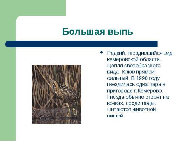 Большая выпь Редкий, гнездившийся вид кемеровской области. Цапля своеобразного вида. Клюв прямой, сильный. В 1990 году гнездилась одна пара в пригороде г.Кемерово. Гнёзда обычно строят на кочках, среди воды. Питаются животной пищей.