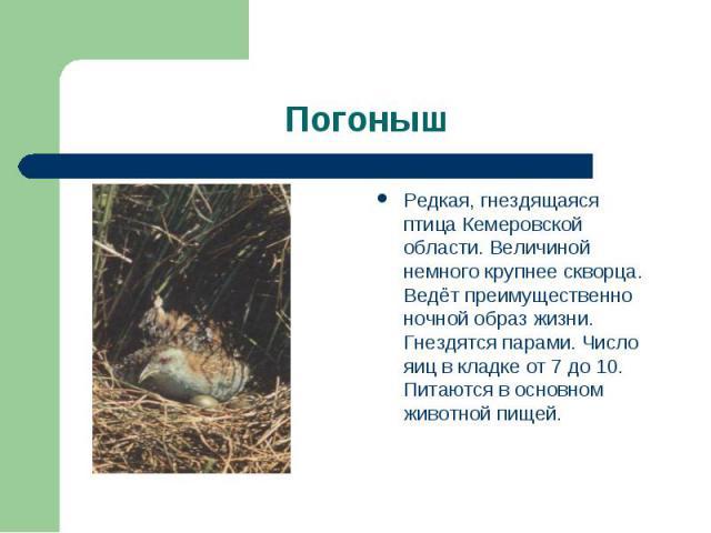 Погоныш Редкая, гнездящаяся птица Кемеровской области. Величиной немного крупнее скворца. Ведёт преимущественно ночной образ жизни. Гнездятся парами. Число яиц в кладке от 7 до 10. Питаются в основном животной пищей.