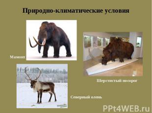 Природно-климатические условия Мамонт Шерстистый носорог Северный олень