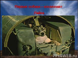 Первая собака – космонавт Лайка