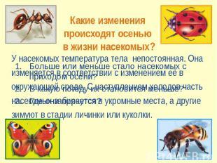 Какие изменения происходят осенью в жизни насекомых? У насекомых температура тел