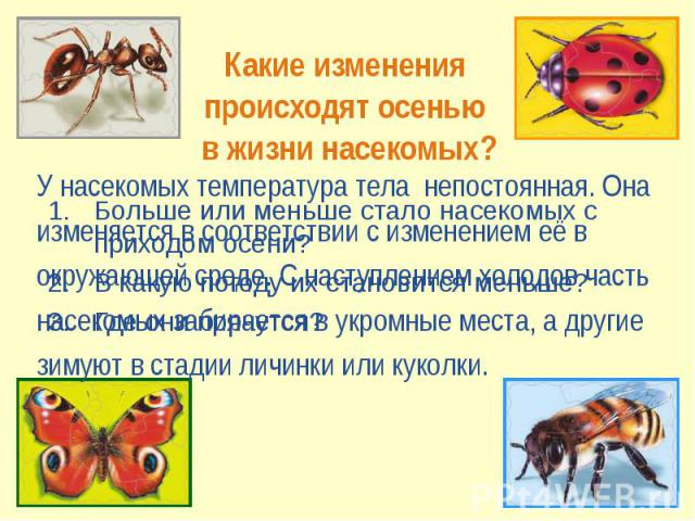 Какие изменения происходят осенью в жизни насекомых? У насекомых температура тела непостоянная. Онаизменяется в соответствии с изменением её в окружающей среде. С наступлением холодов часть насекомых забирается в укромные места, а другие зимуют в ст…
