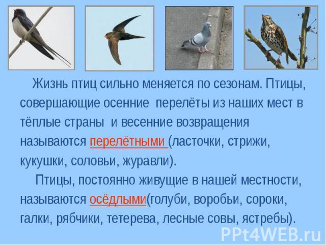 Жизнь птиц сильно меняется по сезонам. Птицы,совершающие осенние перелёты из наших мест в тёплые страны и весенние возвращения называются перелётными (ласточки, стрижи, кукушки, соловьи, журавли). Птицы, постоянно живущие в нашей местности, называют…