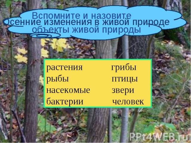 Вспомните и назовите объекты живой природы Осенние изменения в живой природе растения грибырыбы птицынасекомые зверибактерии человек