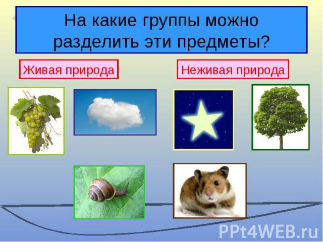 На какие группы можно разделить эти предметы?