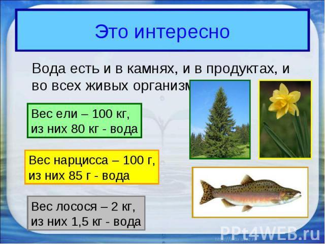 Это интересноВода есть и в камнях, и в продуктах, и во всех живых организмах. Вес ели – 100 кг,из них 80 кг - вода Вес нарцисса – 100 г,из них 85 г - вода Вес лосося – 2 кг,из них 1,5 кг - вода