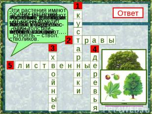 Растения, у которыхлистья в виде плас-тинок, называют … У этих растений от корня