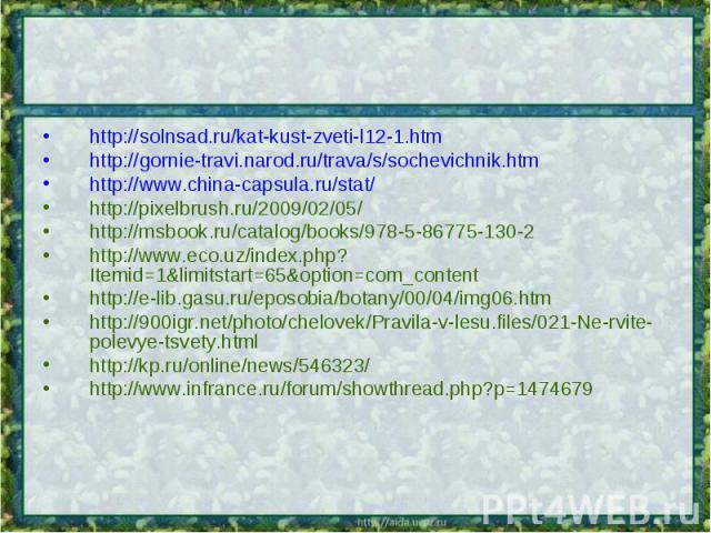 http://solnsad.ru/kat-kust-zveti-l12-1.htmhttp://gornie-travi.narod.ru/trava/s/sochevichnik.htmhttp://www.china-capsula.ru/stat/http://pixelbrush.ru/2009/02/05/http://msbook.ru/catalog/books/978-5-86775-130-2http://www.eco.uz/index.php?Itemid=1&limi…