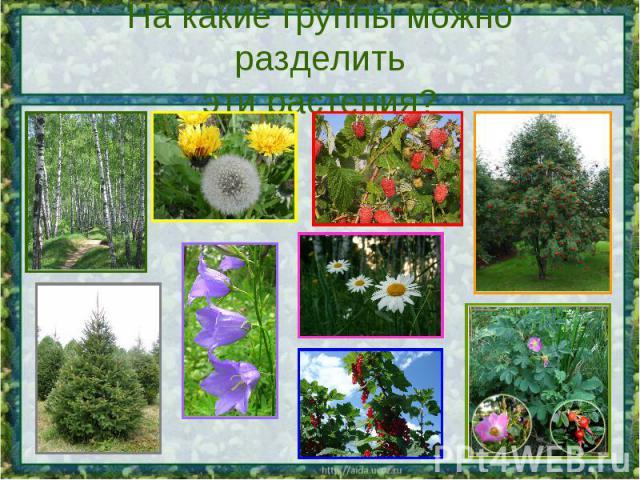 На какие группы можно разделитьэти растения?