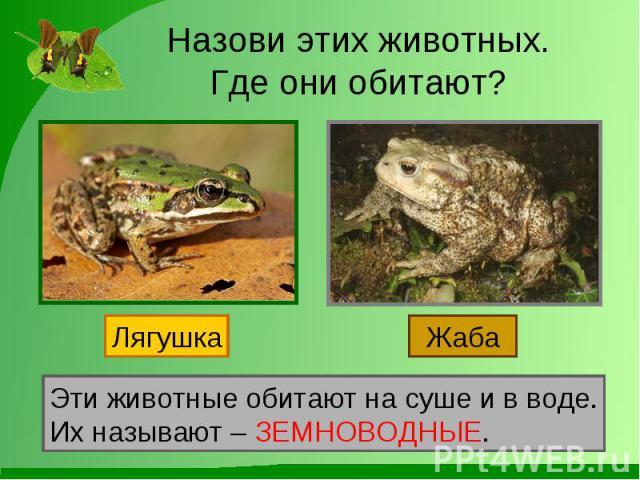 Назови этих животных.Где они обитают? Эти животные обитают на суше и в воде.Их называют – ЗЕМНОВОДНЫЕ.