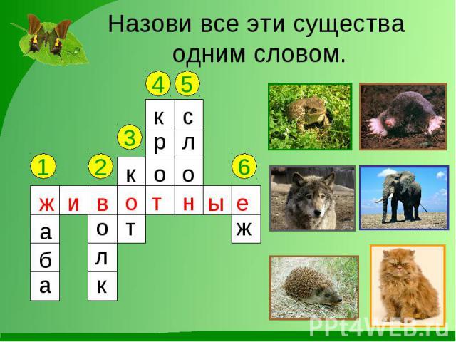 Назови все эти существа одним словом.