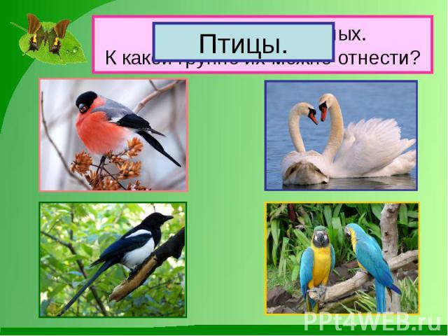 Назови этих животных. К какой группе их можно отнести?