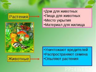Растения Дом для животныхПища для животныхМесто укрытияМатериал для жилища Живот