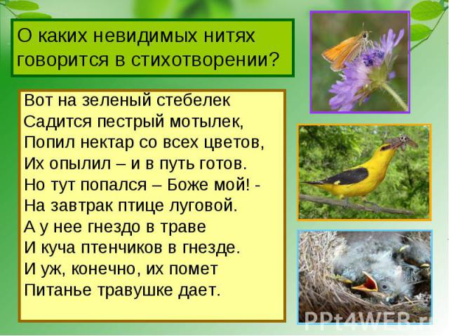 О каких невидимых нитях говорится в стихотворении? Вот на зеленый стебелекСадится пестрый мотылек,Попил нектар со всех цветов,Их опылил – и в путь готов.Но тут попался – Боже мой! -На завтрак птице луговой.А у нее гнездо в травеИ куча птенчиков в гн…