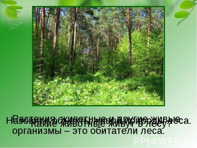 Какие животные живут в лесу? Растения, животные и другие живыеорганизмы – это обитатели леса. Назовите объекты живой природы леса.