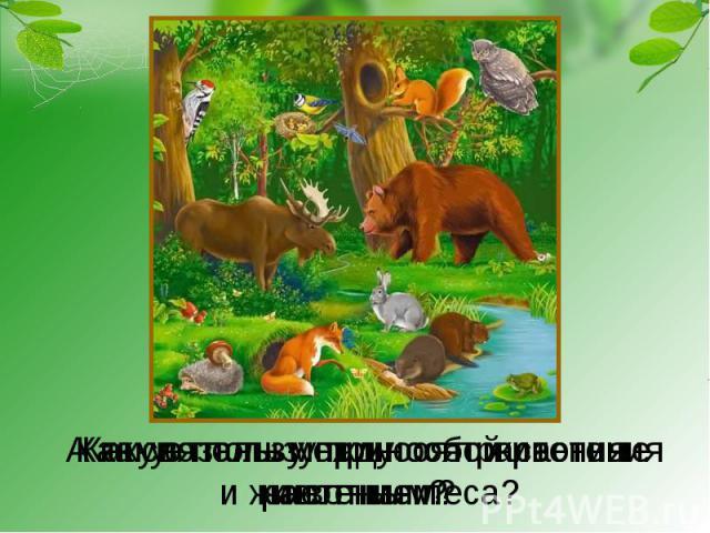 А какую пользу приносят животныерастениям?Какую пользу приносят растенияживотным? Как связаны между собой растенияи животные леса?
