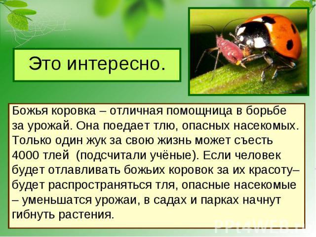 Это интересно. Божья коровка – отличная помощница в борьбеза урожай. Она поедает тлю, опасных насекомых.Только один жук за свою жизнь может съесть 4000 тлей (подсчитали учёные). Если человек будет отлавливать божьих коровок за их красоту– будет расп…