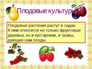 Плодовые культуры Плодовые растения растут в садах.К ним относятся не только фру