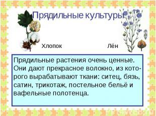 Прядильные культуры Прядильные растения очень ценные. Они дают прекрасное волокн