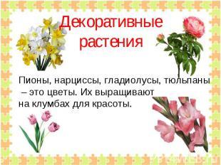 Декоративныерастения Пионы, нарциссы, гладиолусы, тюльпаны – это цветы. Их выращ