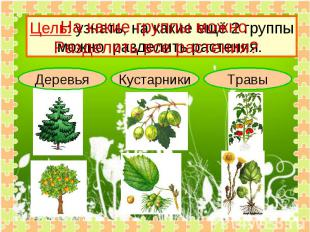 На какие группы можно Разделить все растения? Цель: узнать, на какие ещё 2 групп