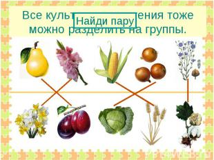 Все культурные растения тоже можно разделить на группы.