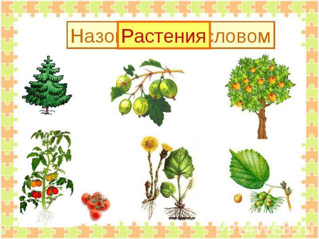 Растения Назови одним словом