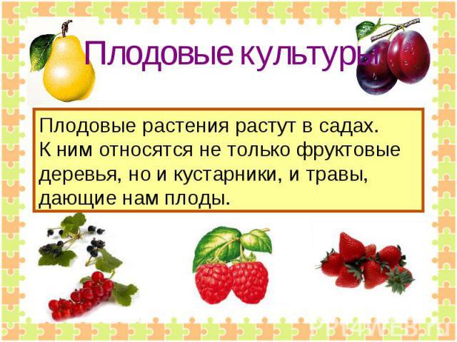 Плодовые культуры Плодовые растения растут в садах.К ним относятся не только фруктовые деревья, но и кустарники, и травы, дающие нам плоды.
